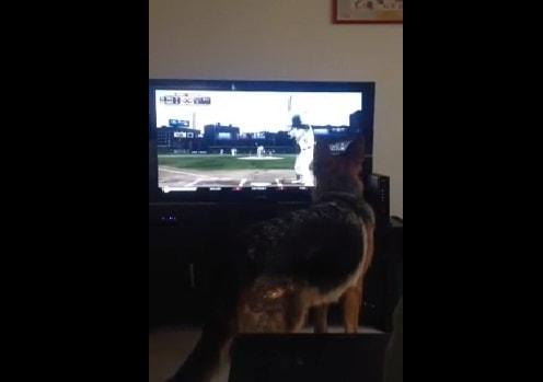dogbaseball
