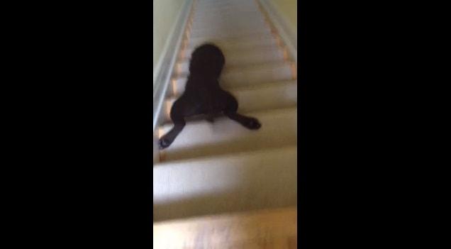 stairdog