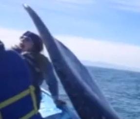 whaleslap