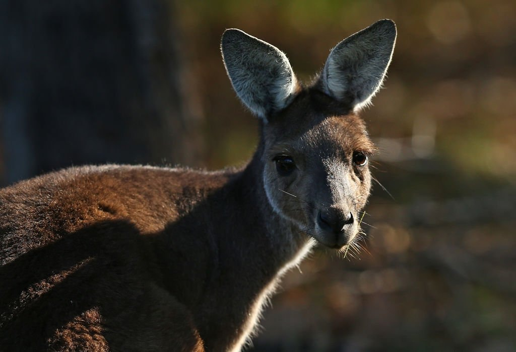 American School Forced To Apologise For Serving Students Kangaroo